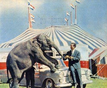 Toni Boltini, met één van zijn olifanten op zijn auto