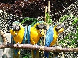 Circus Dieren Geelblauwe Aras