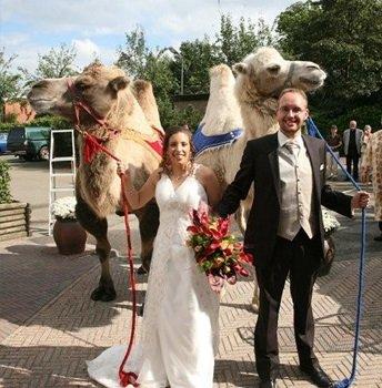 kameel huren