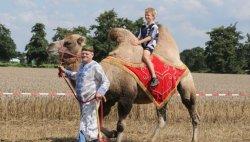 ritje op kameel