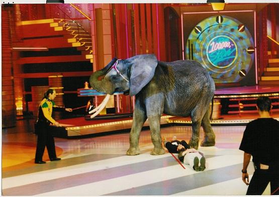 Circus Olifant Sonny bezig met een act
