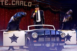 circus act zeeleeuwen en auto